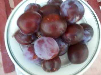 Plums, Red WAF