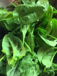 Spinach, B&G