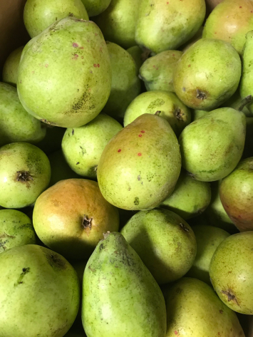Pears, D Anjou WW
