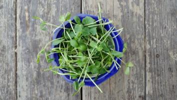 Itty Bitty Salad Mix