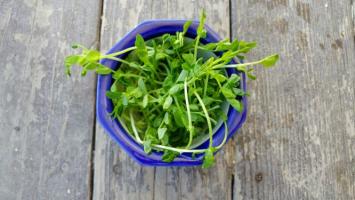 Itty Bitty Peas (Microgreens)