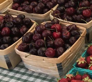 Early Chelan Cherries
