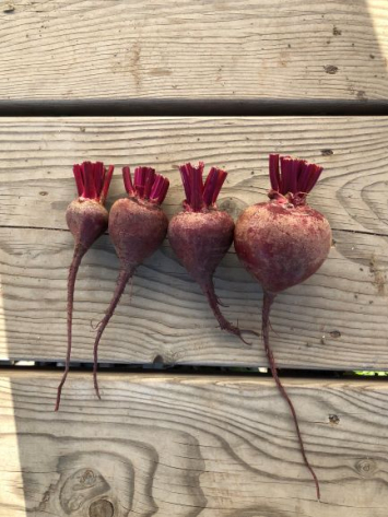 Beets, Red