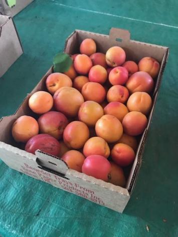 Apricots, BULK WW
