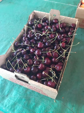 Bing Cherries, BULK