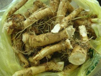 Horseradish Root AH