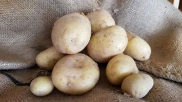 Potatoes, Yellow 25 lb