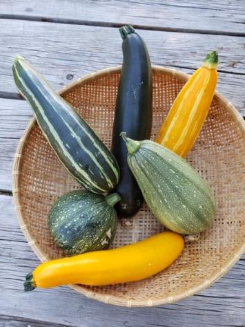 Zucchini,  RE