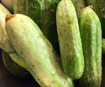 Cucumbers, Pickling B&G