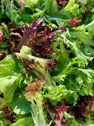 Lettuce, Premium Salad BULK