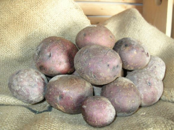 Potatoes, Huckleberry Gold