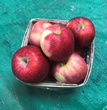 Apples, Gala