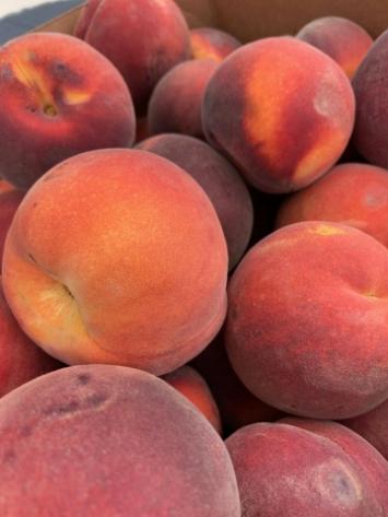 Peaches, Summer Lady BULK FM