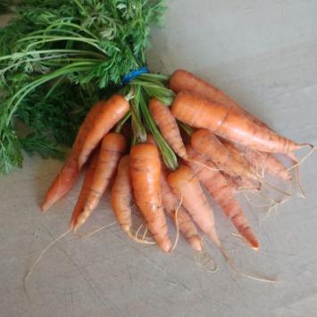 Baby Carrots, IB