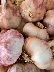 Garlic FM