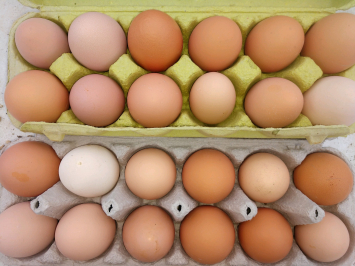 Eggs, FA