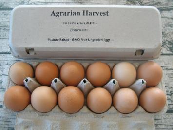 Eggs AH
