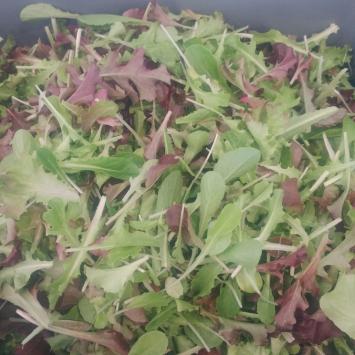 Lettuce, Mixed IB