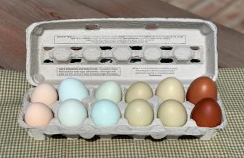 Eggs, RBGD