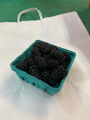 Blackberries, WW