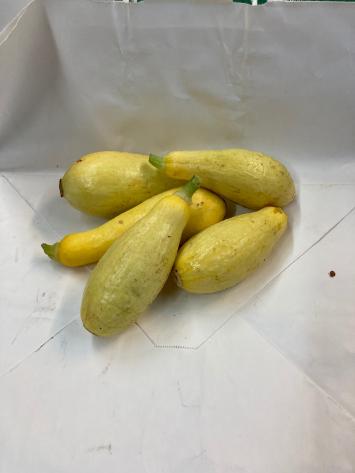 Squash, Summer Yellow WW