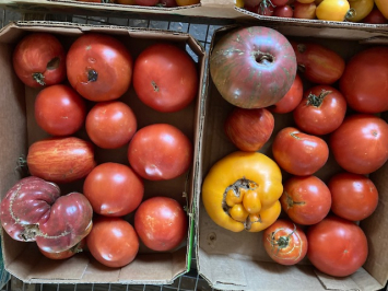 Tomatoes PWHF
