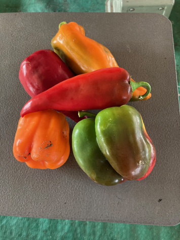 Peppers, Mixed Sweet WW