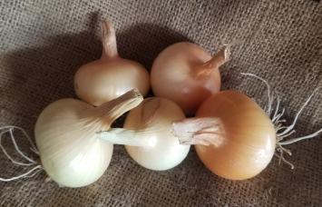 Onion, Candy AH