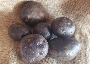 Potatoes, All Blue 5 lb. AH