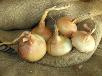 Onion, Yellow AH