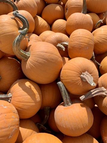 Pumpkins, Pie FM