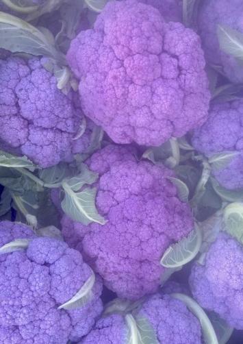 Cauliflower, Purple FM
