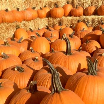 Pumpkins, Carving FM