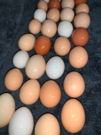 Eggs NF