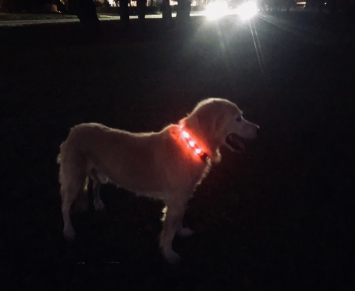 Lighted Pet Collar Large