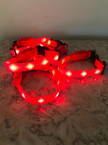 Lighted Pet Collar x small