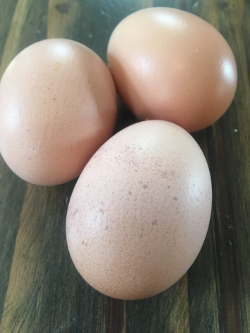 Eggs PFF
