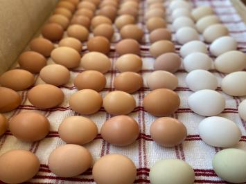 Eggs, A+ - Spring Special!
