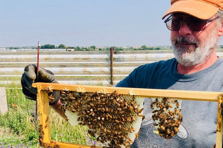 The Importance of Buying Local Raw Honey, Honey