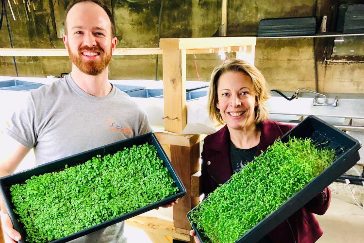 The Ultimate Guide to Microgreens