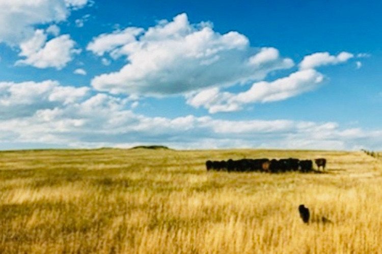 2020 Grass-Fed Beef Harvest Q&A