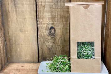 Broccoli Microgreen