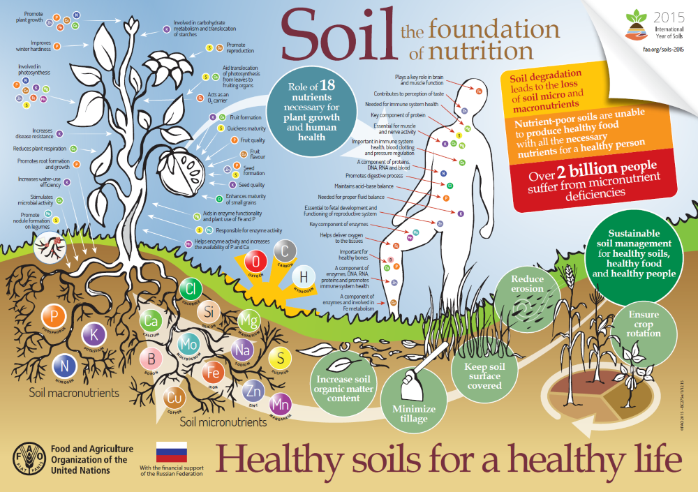 Soil health: why you should care!