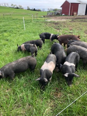Pork Deposit - Whole