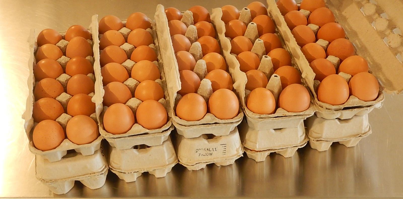 10 X 1 Dozen Eggs