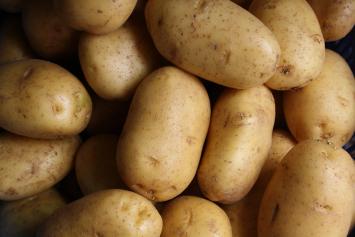 Potatoes, Kennebec