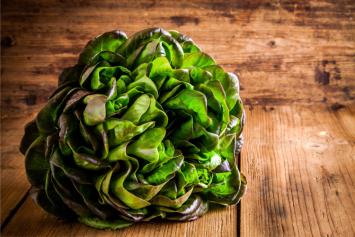 Lettuce, Red Bibb
