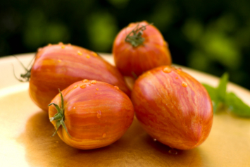 Tomatoes, plum, Speckled Roman
