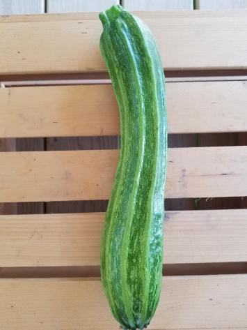 Romanesco Zucchini
