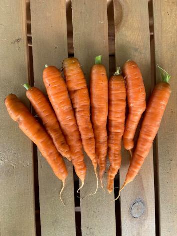 Carrots (1 Bunch)